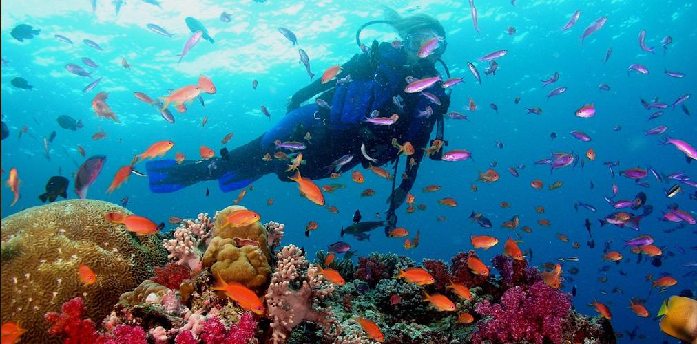phu-quoc-beach-coral-3